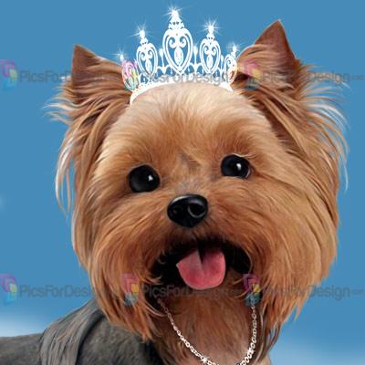Yorkshire Terrier Illustration Store Picsfordesign Com Psp Tubes